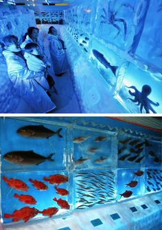 This is a very cool aquarium. So cool, in fact, that it's frozen! This crazy tourist attraction is a frozen aquarium located at Kesennnuma Port in northern Japan.    Octopus, crab and other fish are flash frozen and displayed in large, clear blocks of ice. Aquarium-goers can observe over 450 marine specimens contained in about 50 ice cubes at the aquarium, where room temperature is kept at a very chilly negative 20 degrees Celsius.