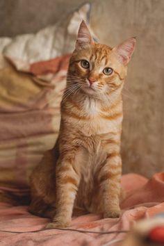 Cute Cats And Kittens, Kittens Cutest, Ragdoll Kittens, Funny Kittens, Pretty Cats, Beautiful Cats, Pretty Kitty, Gato Grande, Gatos Cats