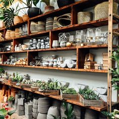 Been a while since we shared a big, wide solarium shelfie... so here you go! Hope everyone's having a great, plant-filled week.
