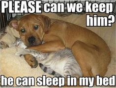 Please keep him! Bedroom, cat, Dog, Funny, funny animal