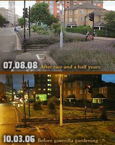 Guerrilla Gardening – before and after
