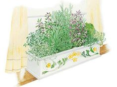 Do you want to start your own garden? Then start out small by growing your own herbs. // An Indoor Herb Box Garden Plan