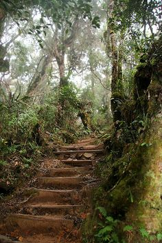 Climbing the thousand steps to the summit of Mt Kinabalu, Borneo