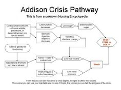 Addisonian crisis pathway