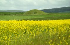 Maeshowe is more than 5000 years old, and is the finest chambered tomb in north-west Europe. Make this the year you visit! Homecoming 2014, Ages Of Man, Orkney Islands, Going On Holiday, Days Out, North West, Outlander, Scotland, Ireland