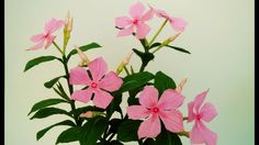 How To Make Catharanthus Roseus Flower From Crepe Paper - Craft Tutorial