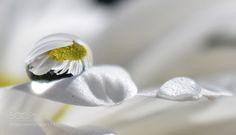 my pearl by AylinKalan