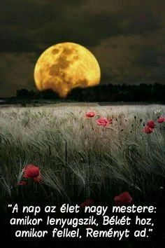 This has got to be one of the most beautiful moon images out there. Moon and a poppy field. Beautiful Moon, Beautiful World, Beautiful Places, Beautiful Scenery, Simply Beautiful, Amazing Places, Moon Pictures, Pretty Pictures, Moon Images