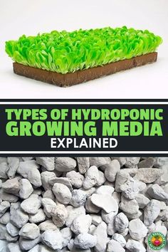 Hydroponic Growing Media Guide You Need Learn the pros and cons of each type of hydroponic and plant growing media in this in-depth guide.Learn the pros and cons of each type of hydroponic and plant growing media in this in-depth guide. Aquaponics System, Hydroponic Grow Systems, Hydroponic Farming, Hydroponic Growing, Aquaponics Fish, Growing Plants, Aquaponics Greenhouse, Hydroponic Plants, Hydroponic Tomatoes