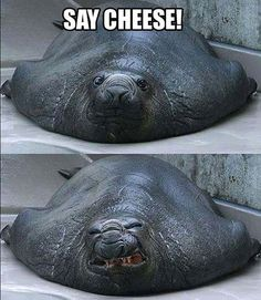 funny pictures of animals #Creepy or #Funny?? Not sure...