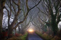 The Dark Hedges - Northern Ireland.