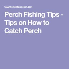 Perch Fishing Tips - Tips on How to Catch Perch