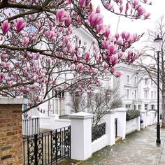 Blossom Trees, Blossoms, Pink Trees, Pretty Much, Time Of The Year, Spring Time, Thinking Of You, Sidewalk, Rain