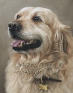 Mary Herbert - Pastel.. I have just come back from a four day art course with Mary, truly inspirational