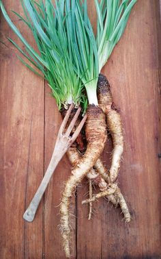 """""""3 Rare Root Crops: Growing Crosnes, Salsify and Skirret"""" Learn about growing crosnes, salsify and skirret in your home garden, plus get tips for incorporating the unique flavors of these root crops into your cooking. From MOTHER EARTH NEWS Magazine"""