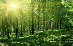 spring forest - Google Search