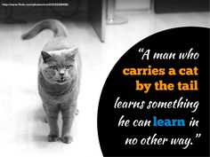 Cat by the tail quote -Mark Twain -see more Twain quotes on #slideshare