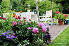 Pikkutalon elämää: Yltäkylläisyyden aikaa puutarhassa