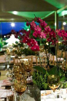 Orquídeas pink