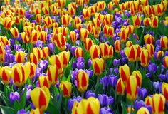 Texture, color and variety. Read about the gardens of Keukenhof.