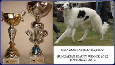"Great news from kennel Go Go Bolshoi;  Lena Martinville ""Tequila"" is  BEAUTY WINNER 2012 &  TOP BORZOI 2012"