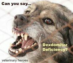 Someone get that dog some dex!