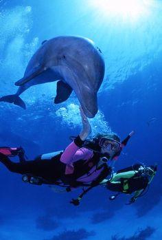 Dolphins and humans  www.hawaiiislandrecovery.com