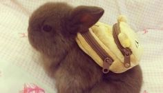 21 Pets Who Are Cuter Than Kids On The First Day Of School - The Dodo