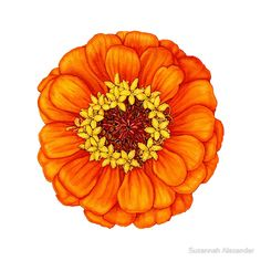 Zinnia in Orange by Suzannah Alexander available at Redbubble.com