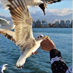 zmir'e gelen herkes özgürdür. Özgür yaşar. Özgür uçar. @cityofizmir #cityofizmir Everyone comes to İzmir is being free. Lives free. Flies free.. All, we are free. Photocredit @fatihkaragurbuz #izmir