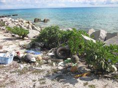 Ocean Plastic Creates Its Own Plastisphere