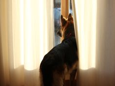 Learn six strategies that can help ease your dog's separation anxiety. | Dog Fancy