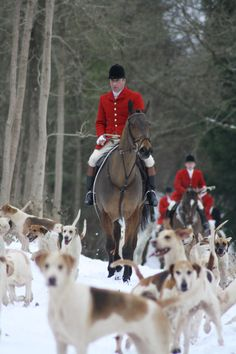 Release the hounds.....Winter fox hunt