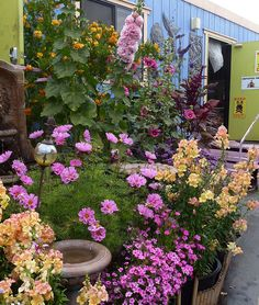 Sample pots by anniesannuals, via Flickr