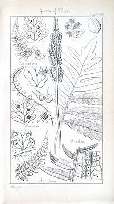 Instant Art Printables - Antique Botany Engravings - The Graphics Fairy
