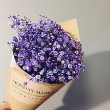 Purple Gypsophila Flower Seeds