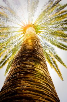 This photograph of a palm tree stood out to me for a few different reasons. The angle that this was taken at shows a unique perspective, which inspires me to look at objects in different ways. The colors in this photograph also stood out to me. The warm brown, yellow, and green colors add a sense of warmth, which go along with where the palm tree is located. Along with these colors, the glare on the photograph from the sun grabbed my attention.