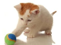 Cats' behaviors when playing are similar to hunting behaviors. These activities allow kittens and younger cats to grow and acquire cognitive and motor skills and to socialize with other cats