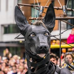 XOLO 3 - Xolo is awake! I went to see the Royal de luxe giant puppets in Liverpool and I was amazed by their sheer size, ingenuity and beauty! This is Xolo the dog, at the restart of the parade I Am Amazing, Gouda, Photography Portfolio, Puppets, Liverpool, Art Work, Dogs, Animals, Animales