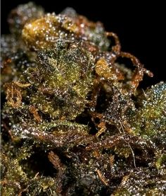 Everything About Weed - Share & Grow The World's Cannabis Knowledge! Puff And Pass, Marijuana Plants, Buy Weed Online, Smoking Weed, Hemp Oil, Natural Medicine, Herbalism, Herbs, Ganja