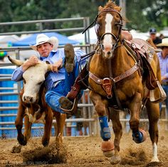 so, you want to jump off your horse at a full gallop onto a cows head . sounds fun when can I start? Western Riding, Horse Riding, Western Art, Cowboy Horse, Cowboy And Cowgirl, Lucky Luke, Rodeo Cowboys, Ride Rodeo, Pro Rodeo