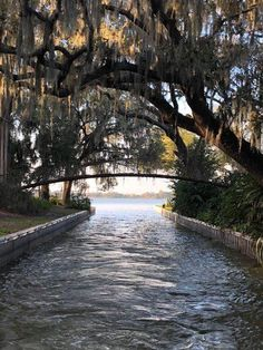 Take a scenic tour of the Winter Haven Chain of Lakes, snagging some stellar sunsets and waterfront views, Top cruises and tours Places In Florida, Visit Florida, Florida Vacation, Florida Travel, Vacation Places, Florida Beaches, Vacation Destinations, Vacation Spots, Travel Usa
