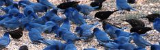 For 25 years Project FeederWatch has been tracking the winter movement and survival of bird populations.
