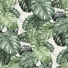 Botany Monstera - Mural de pared y papel tapiz fotográfico - Photowall