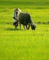 Pertanian adalah sinergi sempurna antara unsur biotik, abiotik, dan manusia.