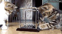 too cute kittens :3