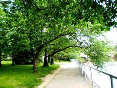Potomac River Park, Washington D.C.
