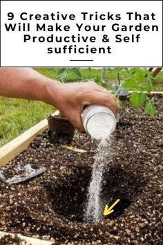 Essential Tips for Starting a Vegetable Garden Backyard Vegetable Gardens, Small Backyard Gardens, Veg Garden, Vegetable Garden Design, Lawn And Garden, Small Gardens, Garden Beds, Garden Shrubs, Planting Vegetables
