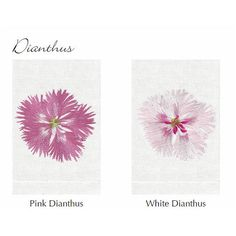 Anali Dianthus Embroidered Roma Terry Towels