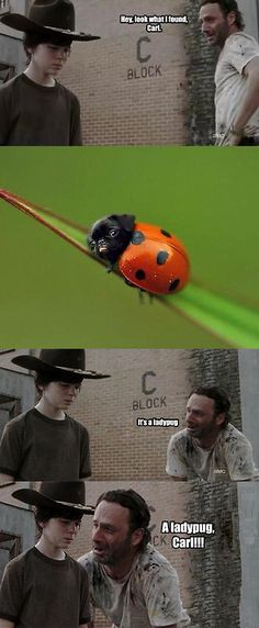 37 Hilariously Horrible Walking Dead Dad Jokes [Gallery] | The Lion's Den University